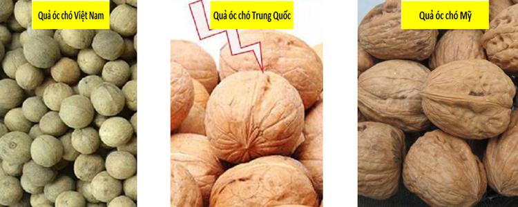 Cách phân biệt quả óc chó Mỹ, Việt Nam và Trung Quốc