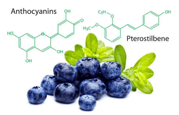 Quả việt quất có tác dụng chống oxy hóa